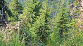 Groen gras met wind in frong van bergkant in de zomer van de staat van Washington stock videobeelden