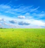 Groen gras onder blauwe hemel Royalty-vrije Stock Foto