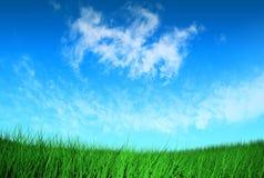 Groen gras onder blauwe hemel Stock Fotografie