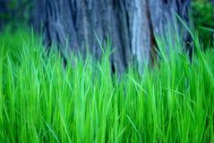 Groen gras onder boom royalty-vrije stock afbeeldingen