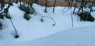 Groen Gras onder de Sneeuw Stock Afbeeldingen