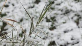 Groen gras onder sneeuwval stock videobeelden