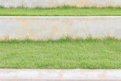 Groen Gras op Beton Royalty-vrije Stock Afbeeldingen