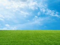 Groen gras op blauwe hemelachtergrond royalty-vrije stock foto