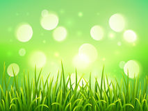 Groen gras op de achtergrond van het bokeh lichteffect Stock Afbeelding
