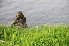 Groen gras op de Klippen van Moher, Ierland Stock Fotografie