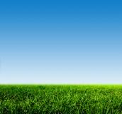 Groen gras op de lentegebied tegen blauwe duidelijke hemel
