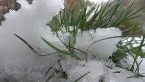 Groen Gras op de Sneeuwachtergrond stock videobeelden