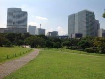 Groen gras op een achtergrond van wolkenkrabbers Stock Foto's