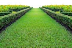 Groen gras op een weg Royalty-vrije Stock Foto's