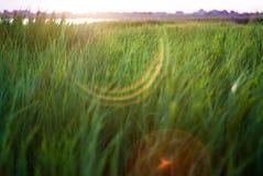 Groen gras op een zonsondergangachtergrond Achtergrond Textuur royalty-vrije stock foto