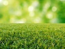 Groen gras op groene achtergrond stock foto