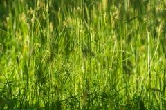 Groen gras op het gebied Royalty-vrije Stock Foto