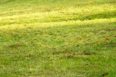 Groen gras op het gebied als achtergrond Royalty-vrije Stock Afbeeldingen