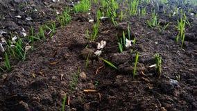 Groen gras op het gebied in de vroege lente royalty-vrije stock foto's