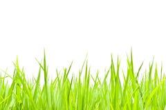 Groen gras op wit Stock Fotografie