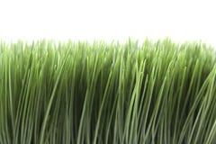 Groen gras op witte achtergrond Stock Foto