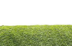 Groen gras op witte achtergrond Stock Afbeelding