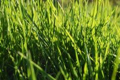 Groen gras op zonnige dag Royalty-vrije Stock Foto's