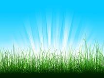 Groen gras over blauwe hemel Stock Afbeeldingen
