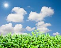 Groen gras over met blukehemel Stock Afbeelding