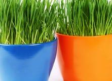 Groen gras in pot een achtergrond Royalty-vrije Stock Foto's