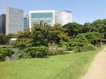 Groen gras tegen de blauwe hemel Royalty-vrije Stock Fotografie