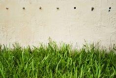 Groen gras tegen muur Stock Foto's