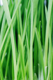 Groen gras. Textuur. Stock Foto's