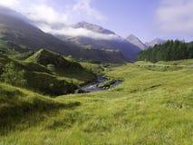 Groen gras van een berg Stock Foto