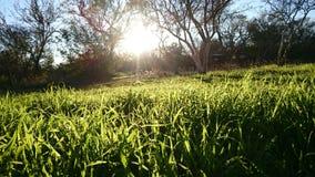 Groen gras van huis Royalty-vrije Stock Foto