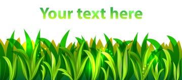 Groen gras, vector Royalty-vrije Stock Foto's