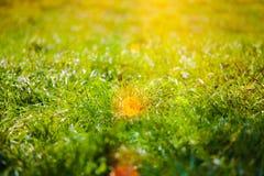 Groen gras voor achtergrond royalty-vrije stock afbeeldingen