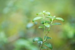 Groen gras voor uw ontwerp Stock Foto's