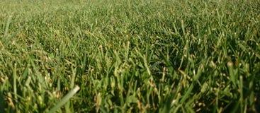 Groen gras, weideachtergrond Stock Afbeeldingen
