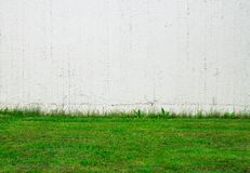 Groen Gras, Witte Muur Stock Afbeeldingen