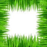Groen grasframe Royalty-vrije Stock Afbeeldingen