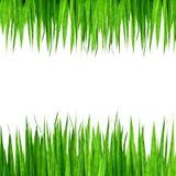 Groen grasframe Royalty-vrije Stock Afbeelding
