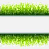 Groen grasframe vector illustratie