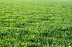 Groen grasgebied stock foto's