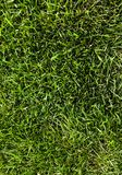 Groen grasgebied Royalty-vrije Stock Foto