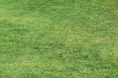 Groen grasgebied stock foto