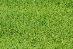 Groen grasgebied Stock Afbeelding