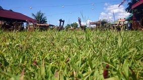 Groen grasgebied, de boerderijrestaurant van het weidelandbouwbedrijf Stock Fotografie