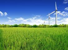 Groen grasgebied en blauwe bewolkte hemelachtergrond Royalty-vrije Stock Afbeeldingen