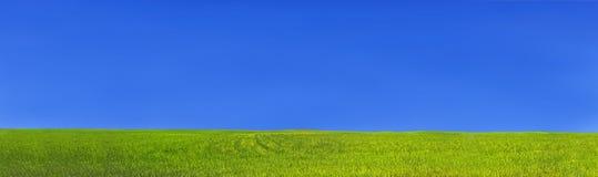 Groen grasgebied en blauwe duidelijke hemel stock afbeeldingen