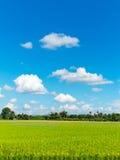 Groen grasgebied en heldere blauwe hemel stock fotografie