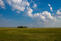 Groen grasgebied en heldere blauwe hemel Royalty-vrije Stock Foto's