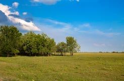 Groen grasgebied en heldere blauwe hemel Royalty-vrije Stock Afbeeldingen
