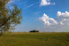 Groen grasgebied en heldere blauwe hemel Achtergrond Royalty-vrije Stock Afbeelding